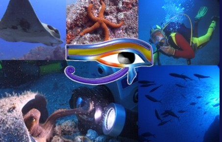 Ocean-Eye underwater camera crew and videography services